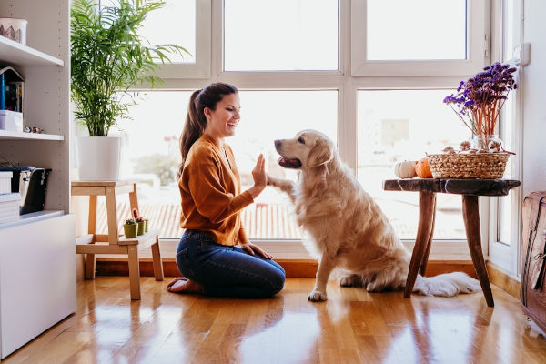 Woman kneeling on the floor, smiling and giving her golden retriever a high five. | declutter in 30 days